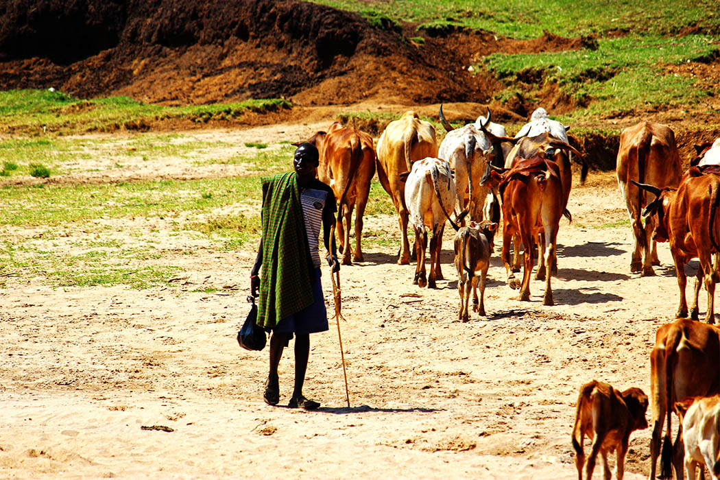Unexpected Kenya_Man with herd