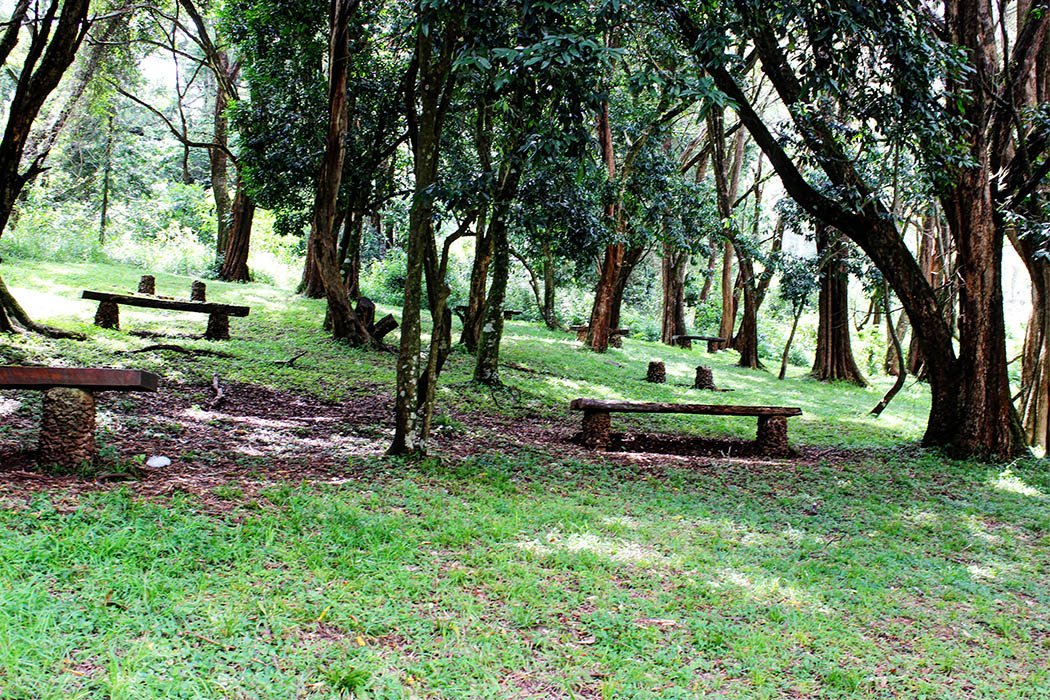 Mt Elgon National Park_Picnic site