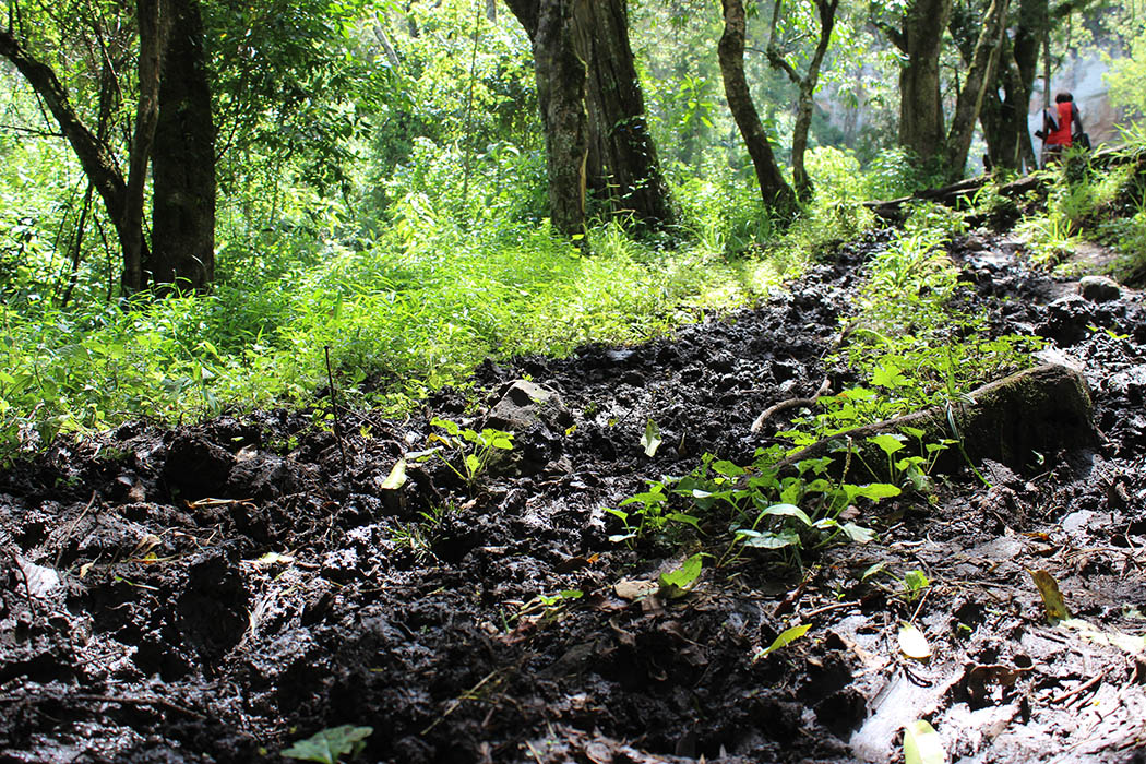Mt Elgon National Park_muddy trail