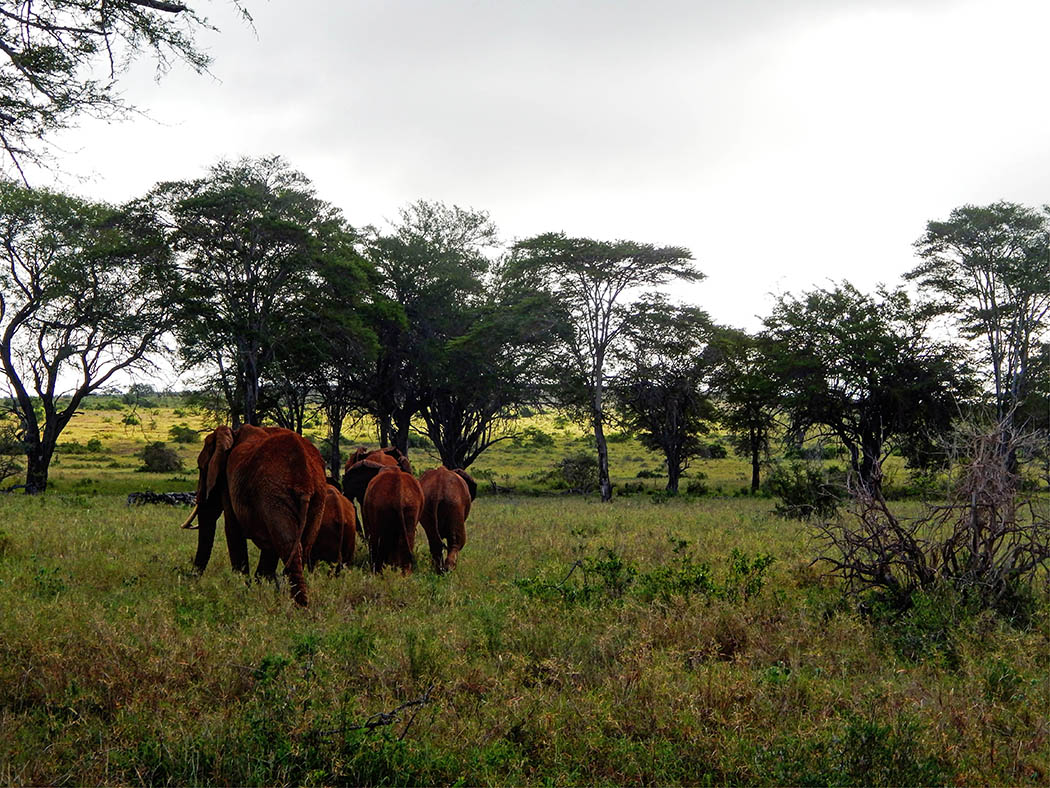 Taita Hills Wildlife Sanctuary_elephants