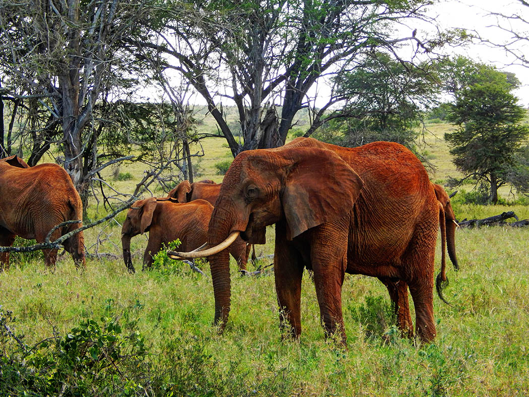 Taita Hills Wildlife Sanctuary_elephants2