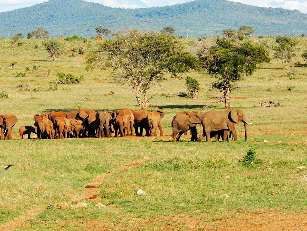 Taita Hills Wildlife Sanctuary_elephants4