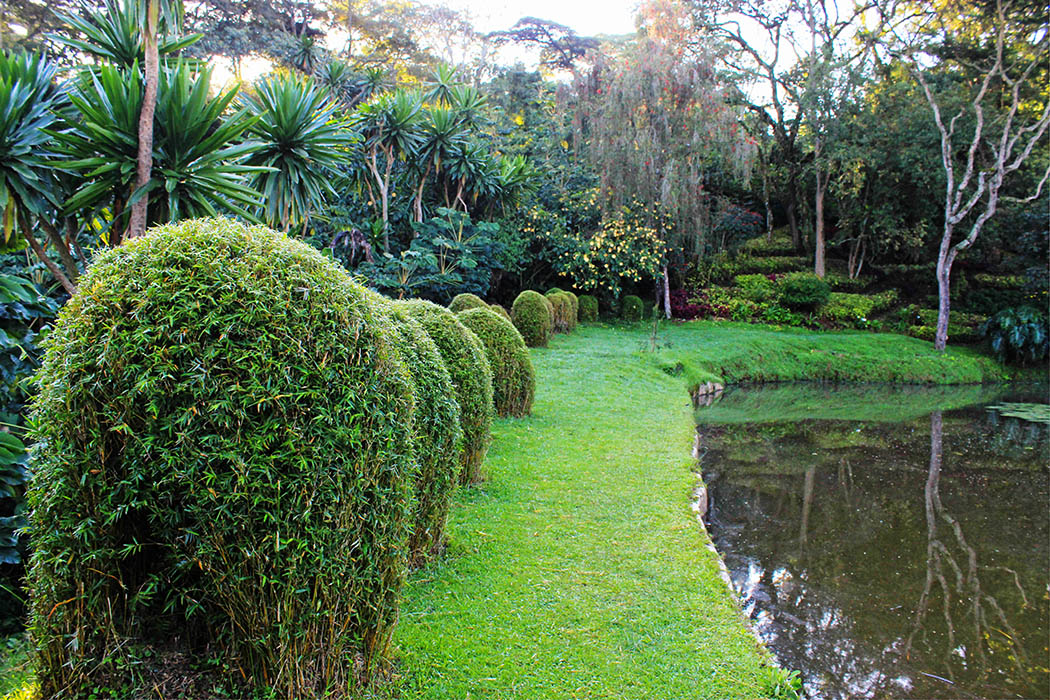 Kapsimotwa gardens_manicured bush