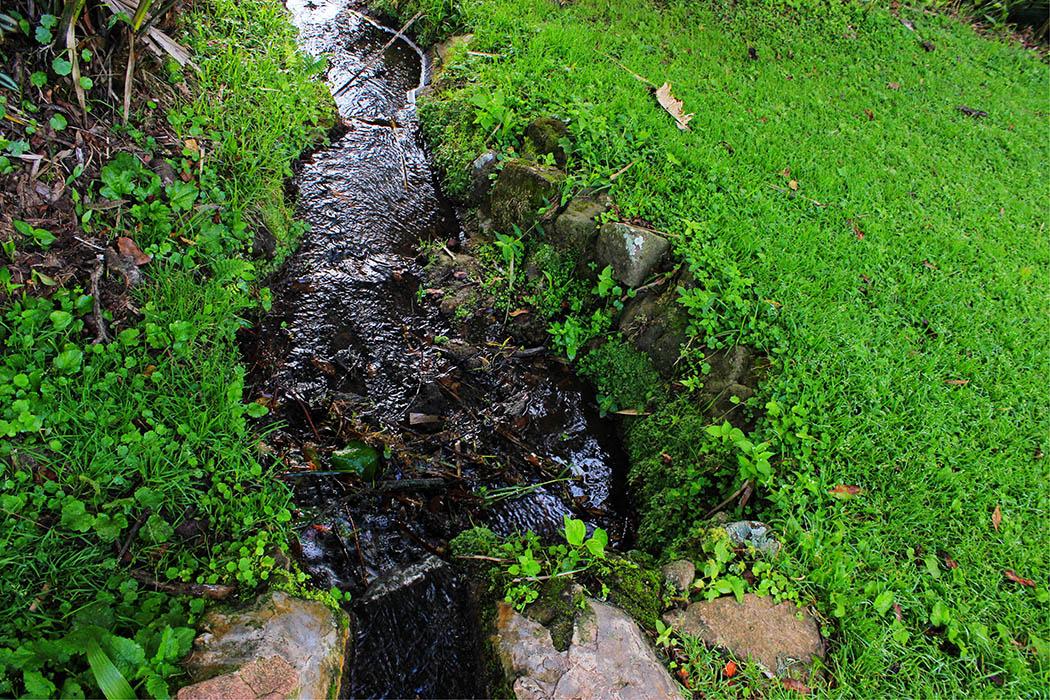 Kapsimotwa gardens_stream
