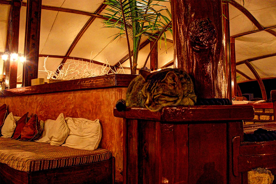 Sands at Nomad restaurant_Hotel cat