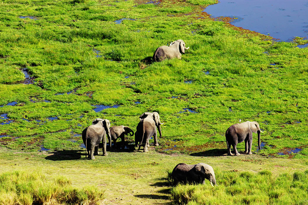 Amboseli Serena Safari Lodge_elephants at observation hill