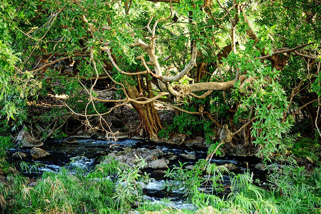 Tsavo West National Park_Mzima springs1