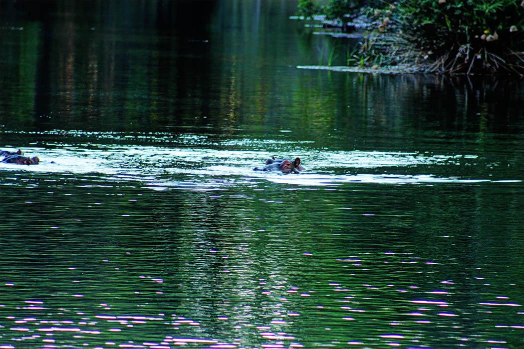 Tsavo West National park_Hippos