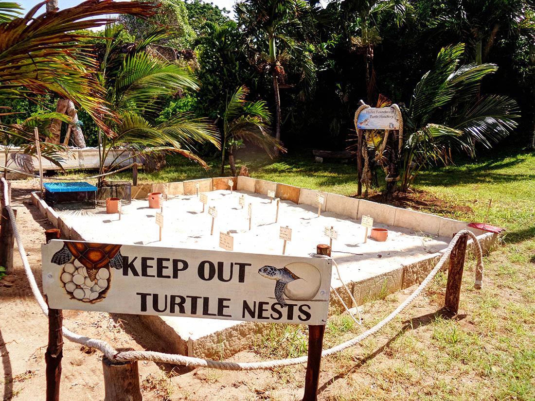 Jumba la Mtwana_Turtle nests