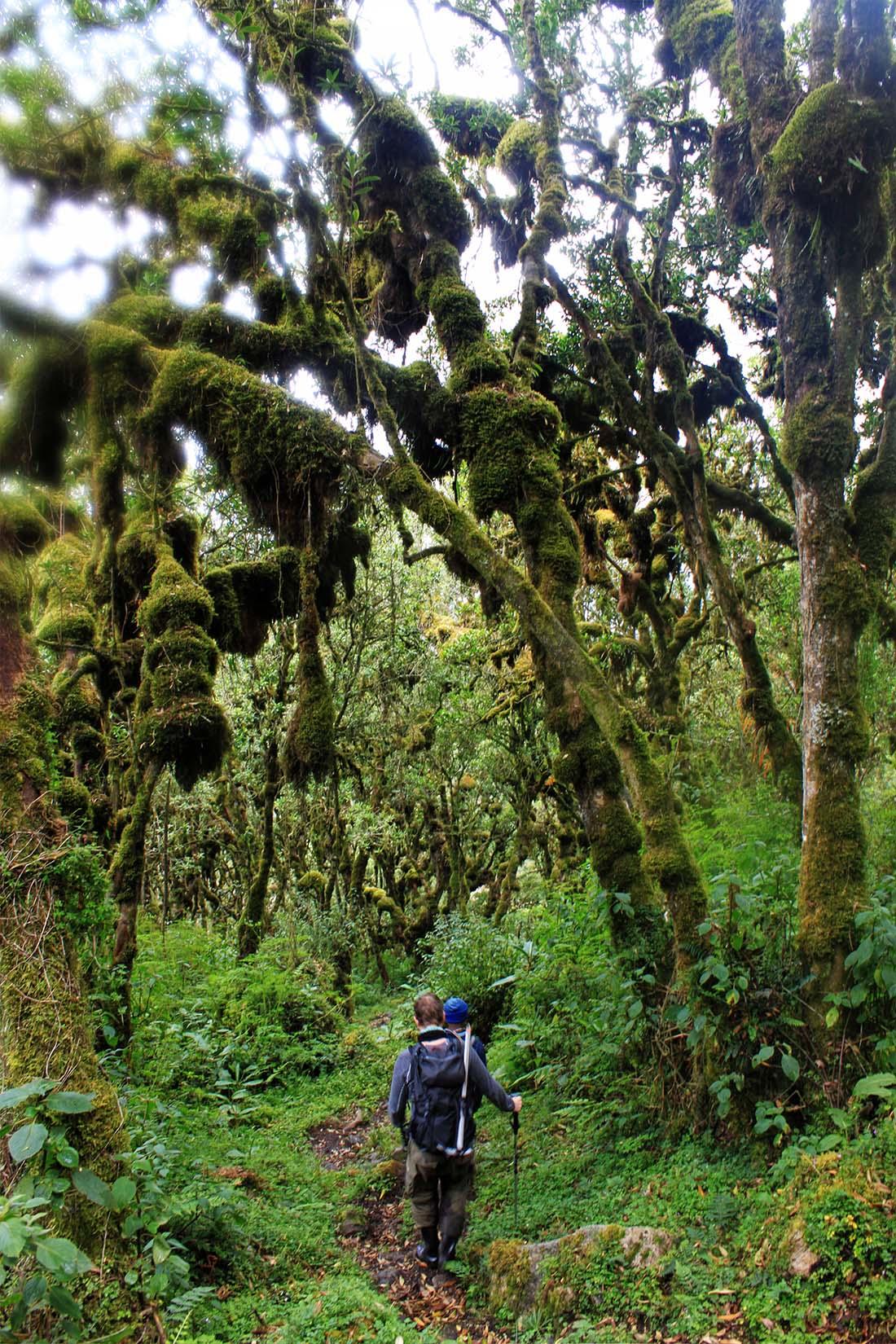 Jorn Eriksson_Rwenzori Mountains_giant lobelias 2