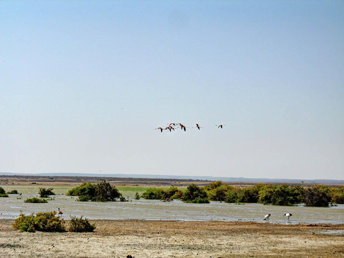 Lake Turkana_African sacred ibis