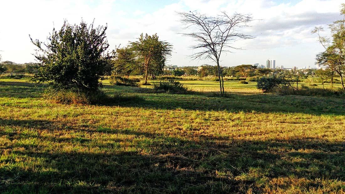 TECNO Camon C5 Review_Uhuru gardens_open field 4