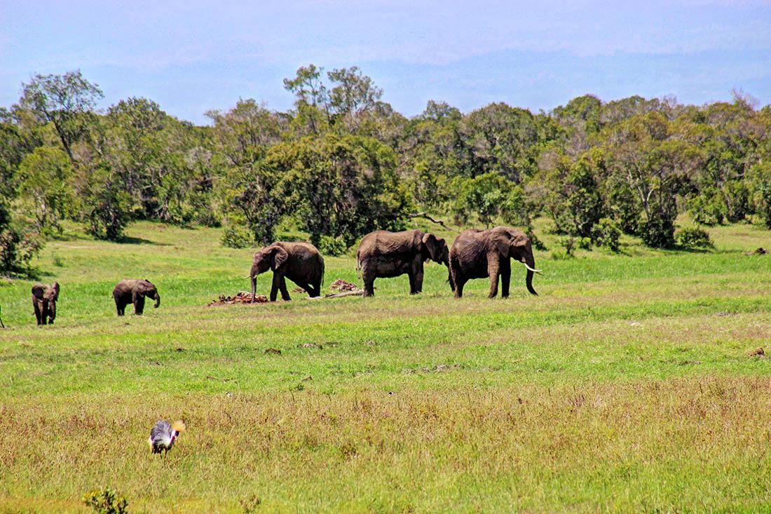 Ol Pejeta Conservancy_elephants1