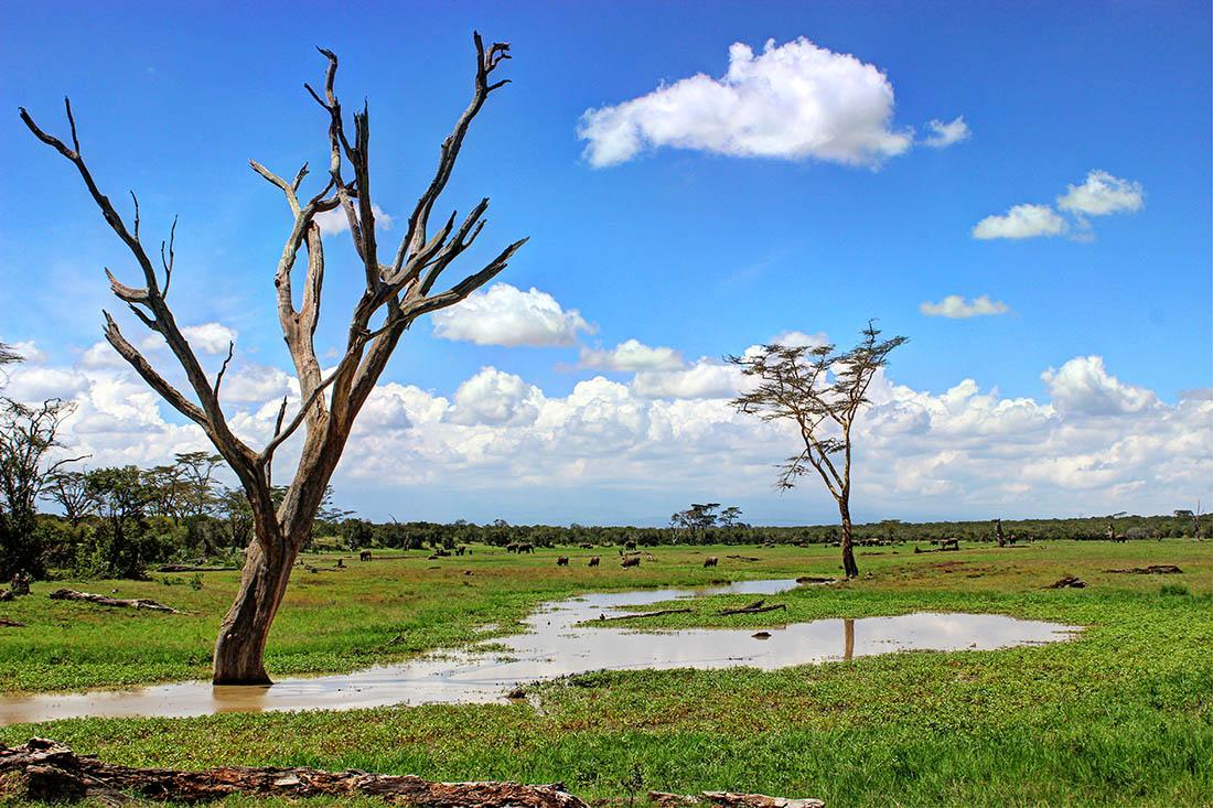Ol Pejeta Conservancy_trees