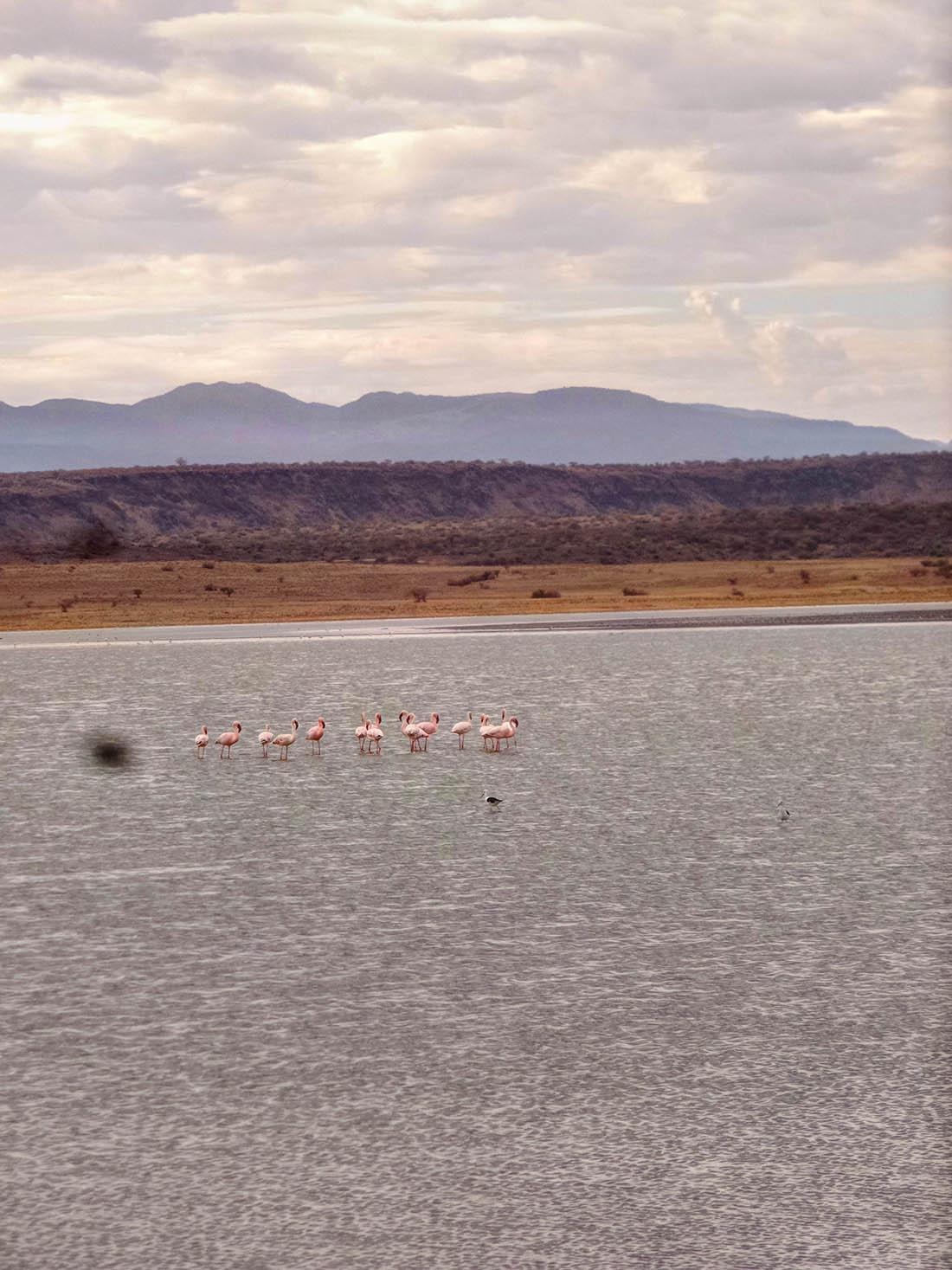Lake Magadi_Flamingoes
