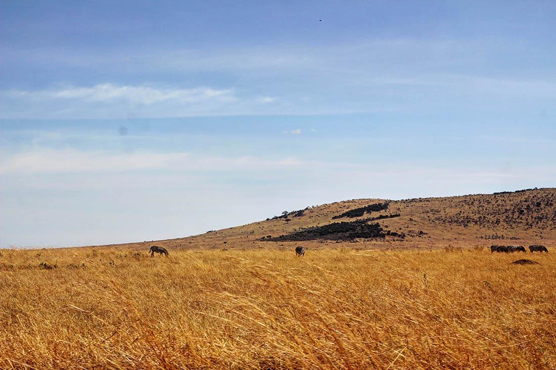 Maasai Mara_grass