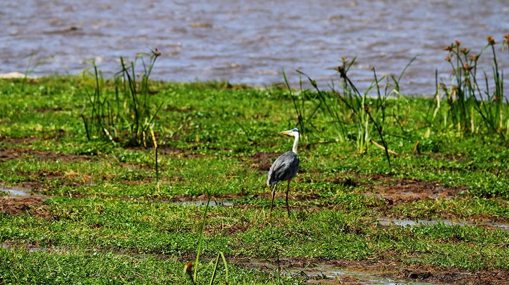 Lake Olbolossat_Bird