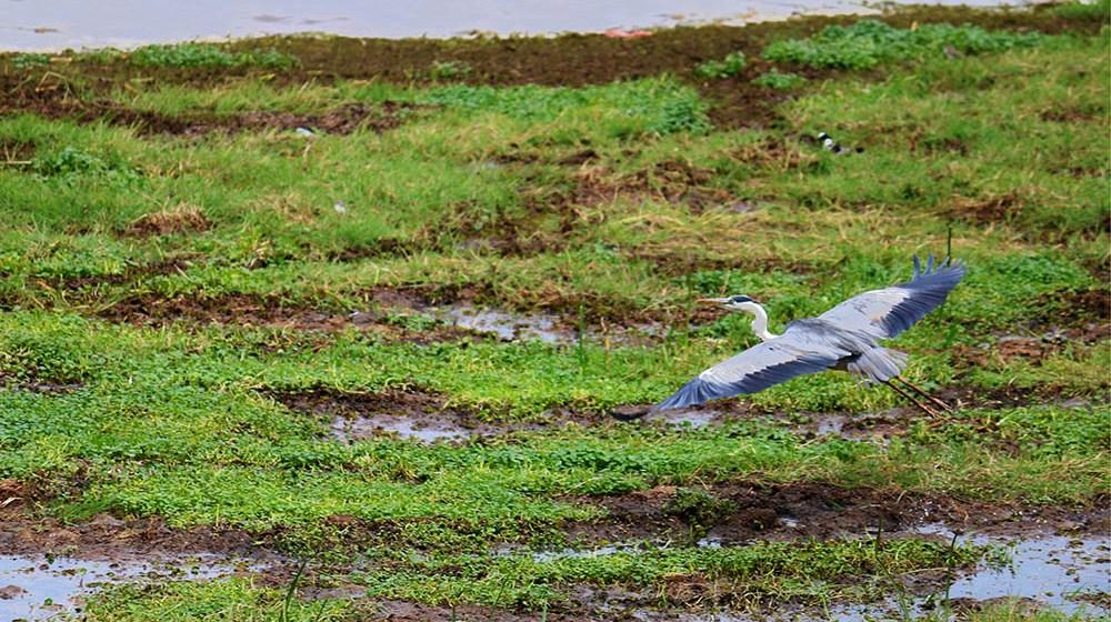 Lake Olbolossat_Bird in flight