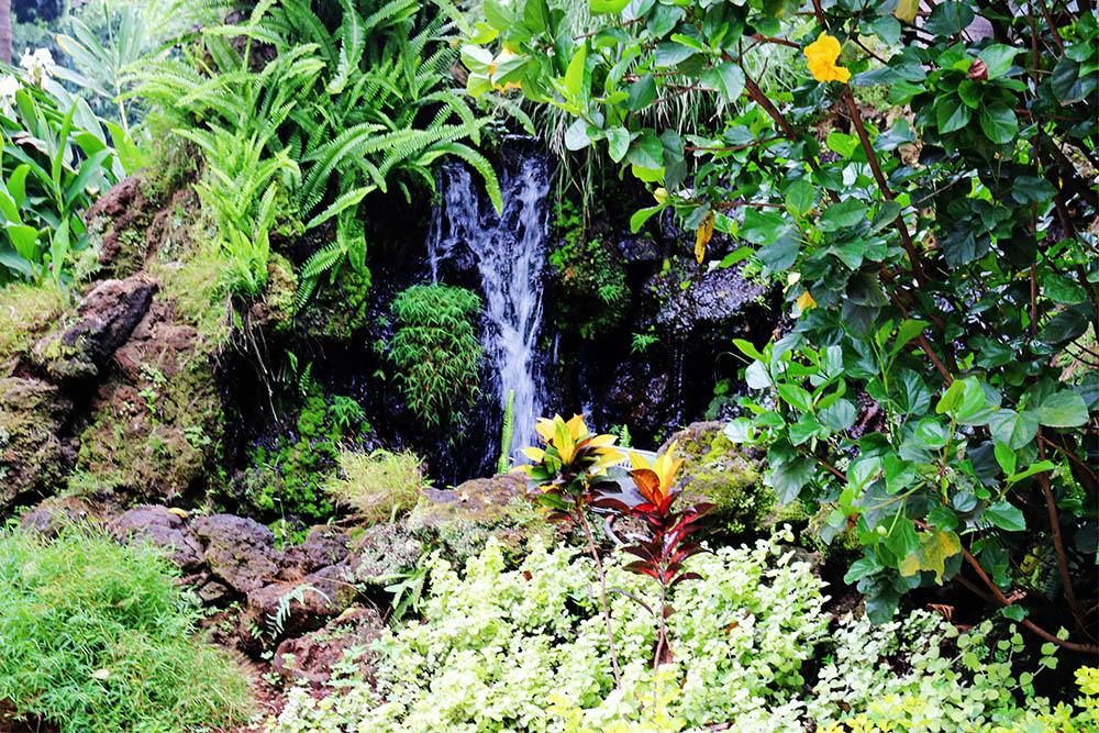 Flame Tree Restaurant_gardens 4