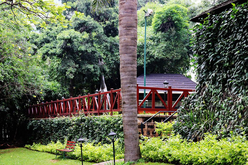 Flame Tree Restaurant_gardens 6