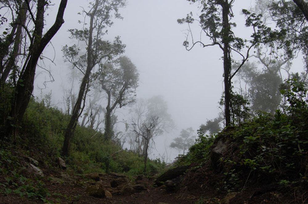 Mount Mulanje_forest