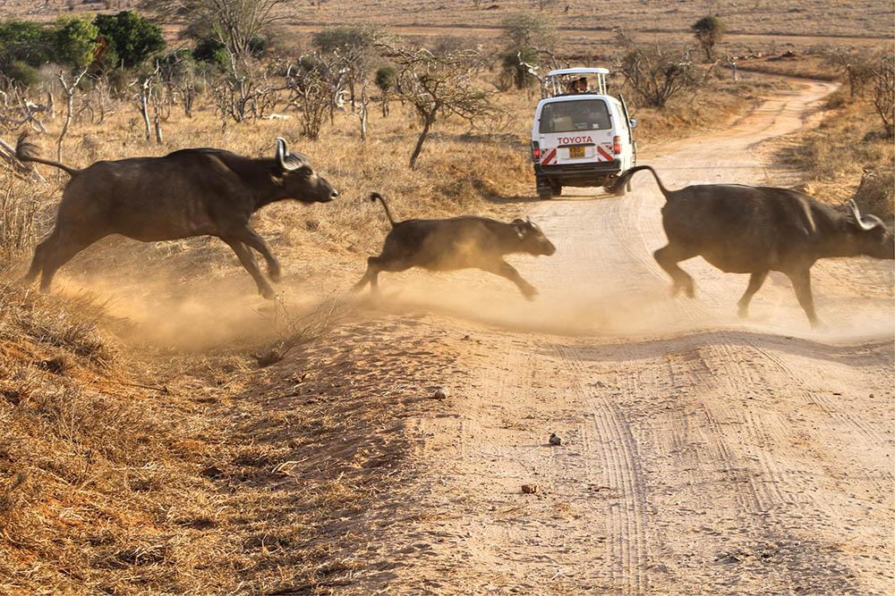 taita-hills-game-reserve_buffalos-crossing1