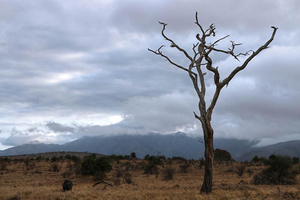 taita-hills-game-reserve_lone-tree