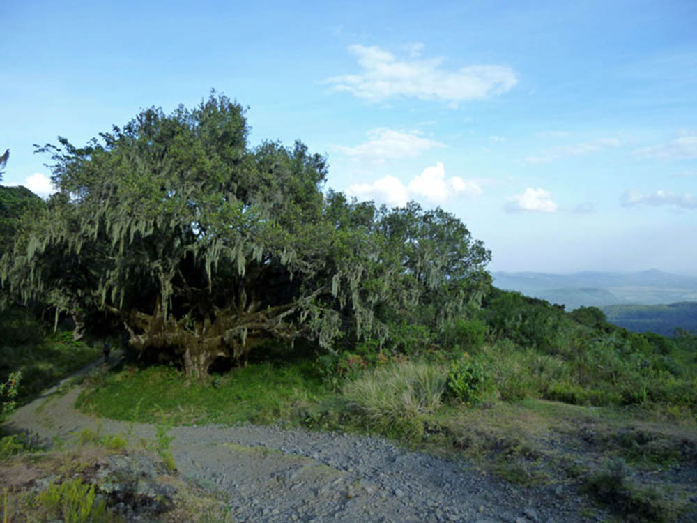 mt-meru_vegetation