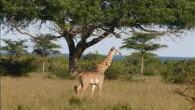 Camping Safari Ngorongoro