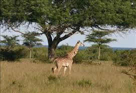 2 Day Camping Safari Ngorongoro Tarangire
