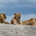3 Day Camping Safari Serengeti Ngorongoro
