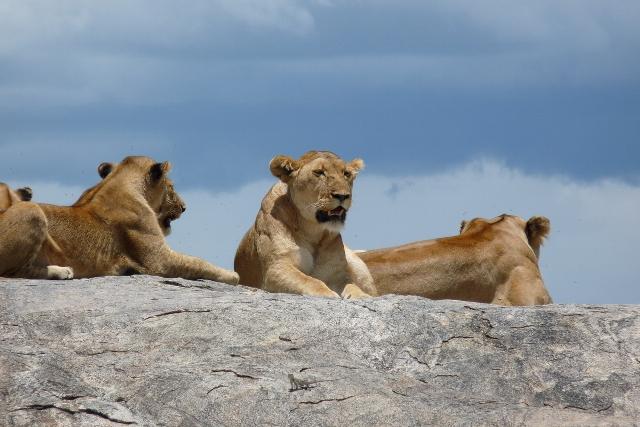 3 Day Camping Safari Serengeti Ngorongoro