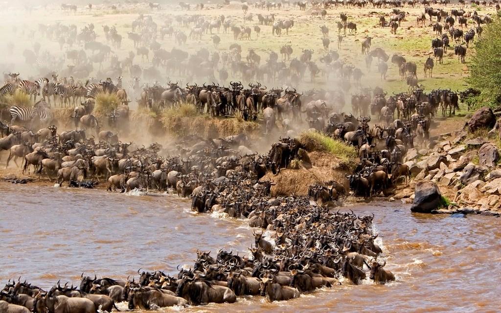 4 Day Safari to Tarangire Manyara Ngorongoro and Eyasi