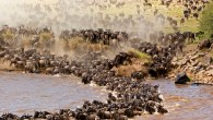 Serengeti-Wildebeest-Migration-Safari