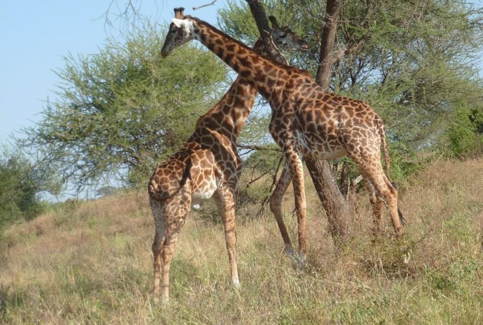 Tanzania 5 Days Camping Safari Ngorongoro Serengeti