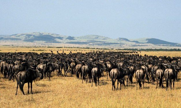 Serengeti Migration Daily Departures
