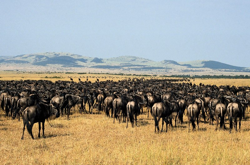 Serengeti Migration Daily Departures