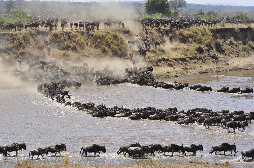 Serengeti Migration 7 Day's Lodge Safari
