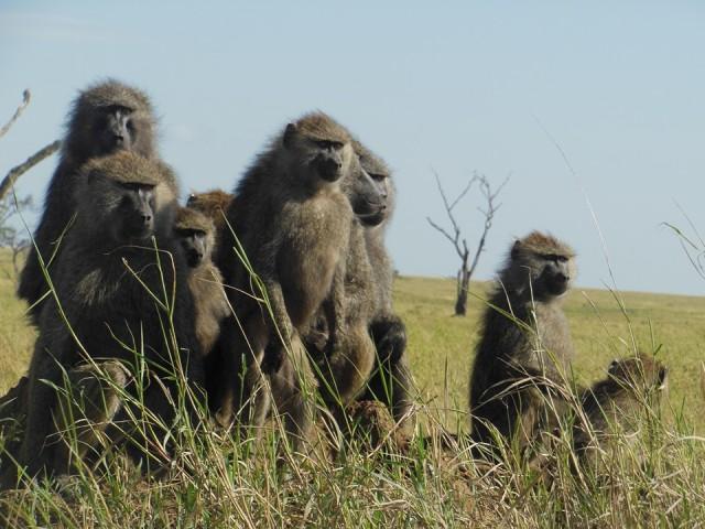 8 Days Tanzania Holiday