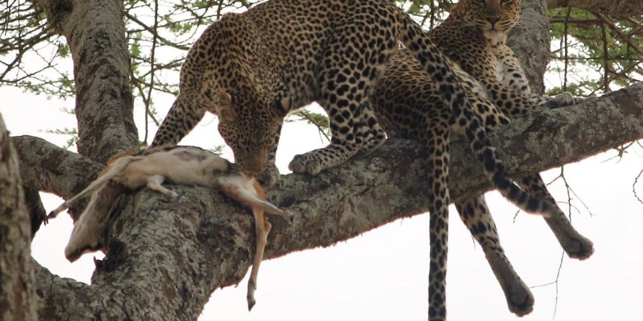 Mwanza Arusha Camping Safari 5 Days