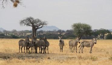 Maasai Mara Amboseli