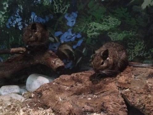 piccola fauna (15)