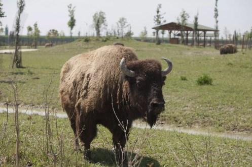 11-05-2012 Inaugurazione Zoo safari