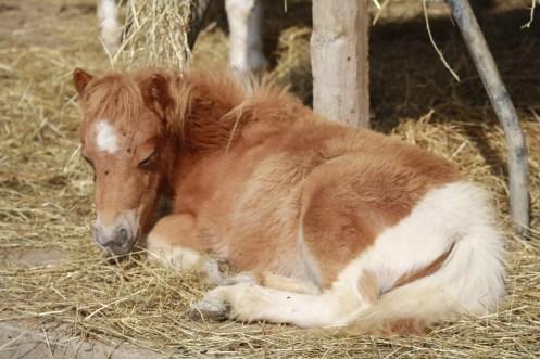pony (5)