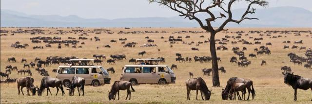 Image result for maasai mara national reserve