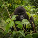 7 Days Uganda Gorilla Safari to Bwindi