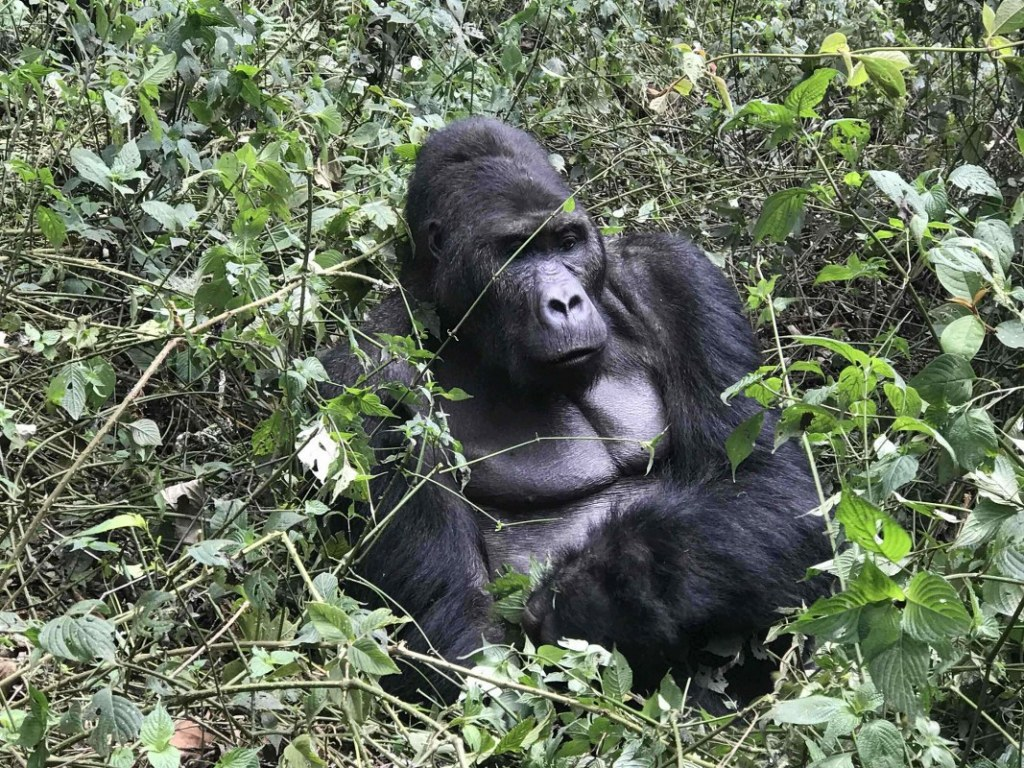 6 Days Congo Primate & Adventure Safari