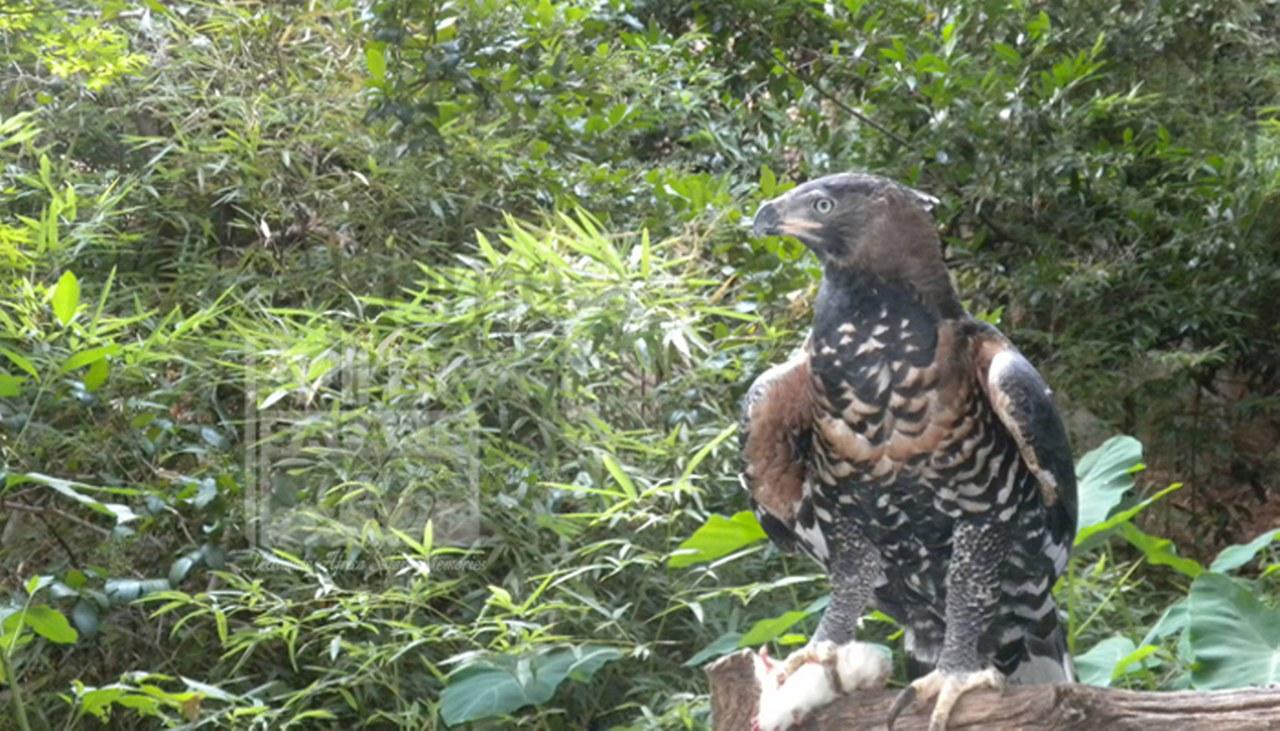 2 days Uganda birding Safari