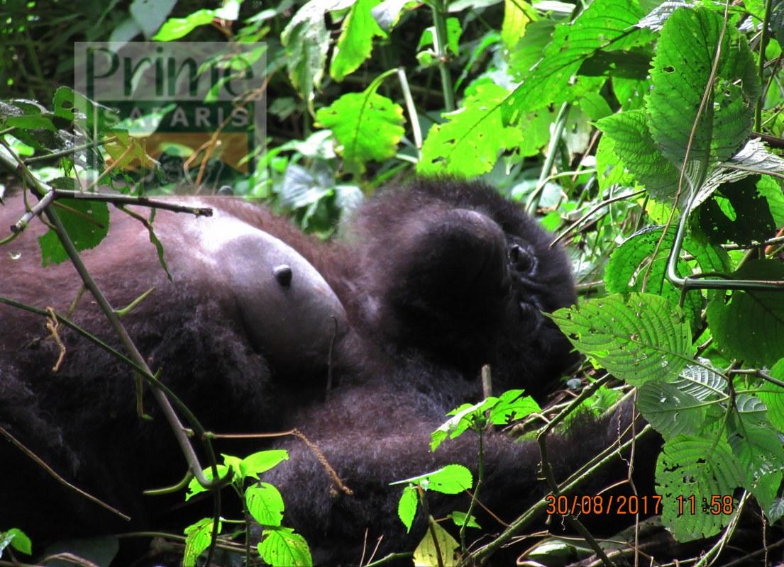 8 days Rwanda Gorilla Safari