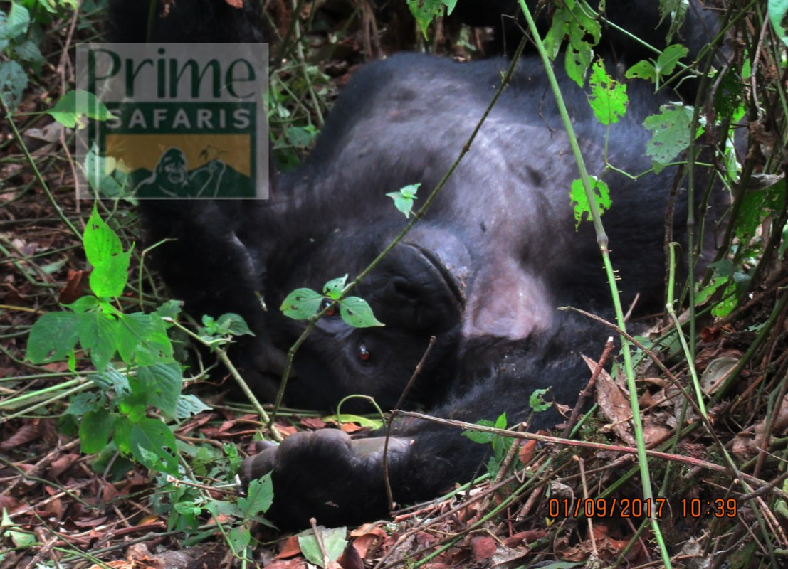 5 days Rwanda Gorilla Safari